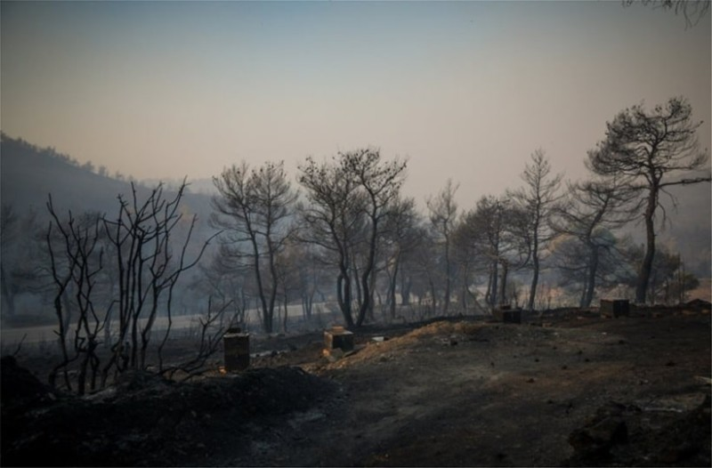 Φωτιά στην Εύβοια: Κρανίου τόπος το δάσος Natura! (photos - video)
