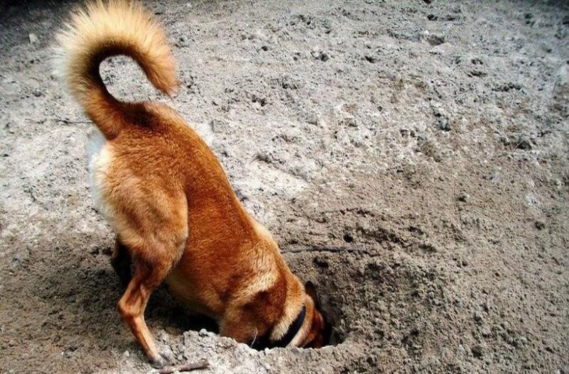 Απίστευτο: Δεν πάει το μυαλό σας για ποιους λόγους οι σκύλοι σκάβουν τρύπες!