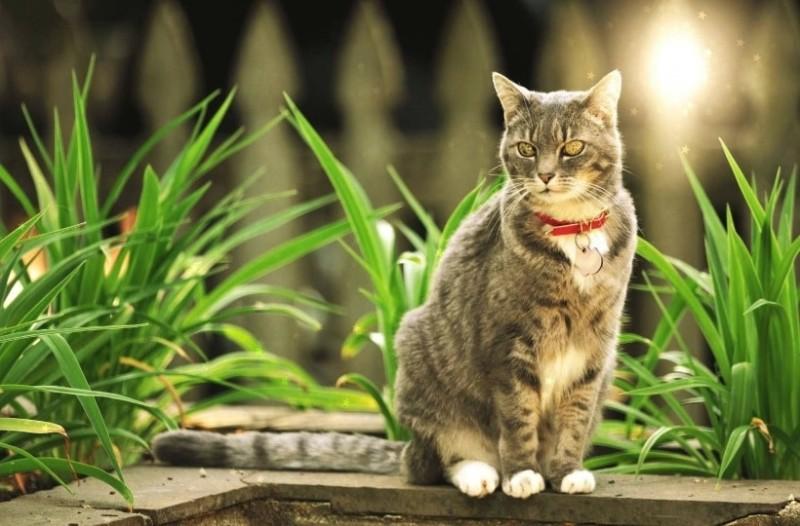 Η γάτα