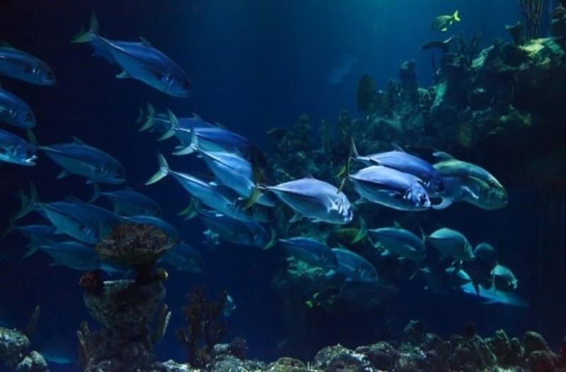 Προσοχή: Aυτά είναι τα 4 φονικά ψάρια των ελληνικών θαλασσών!
