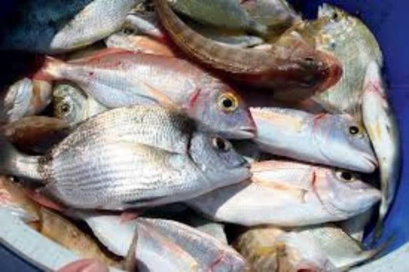 Συναγερμός: Αυτά είναι τα ψάρια που πρέπει να αποφύγετε!