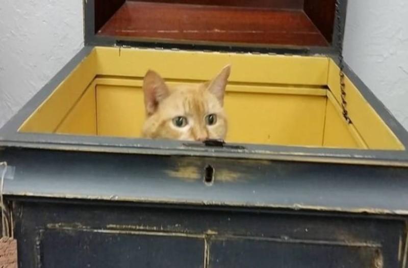 117 ετών γάτος βρίσκει νέο σπίτι σε κατάστημα με αντίκες!