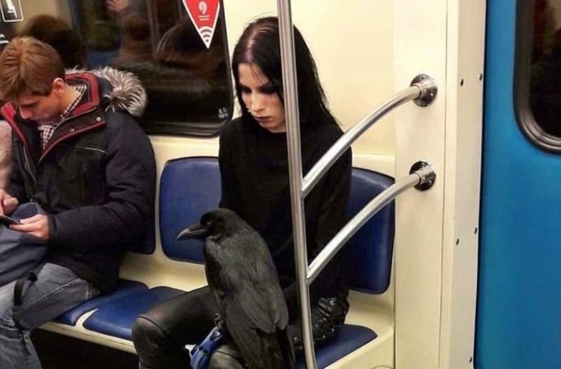 Γυναίκα μπαίνει στο μετρό μαζί με το κοράκι της και γίνεται viral!