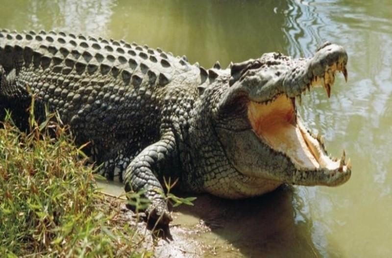 Ανείπωτη τραγωδία: Κροκόδειλος κατασπάραξε 10χρονο μπροστά στους γονείς του!