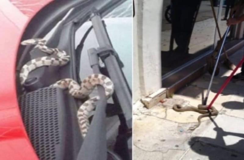 Ανεξήγητο: Μια ολόκληρη πόλη γέμισε φίδια....Προμηνύματα σεισμού;
