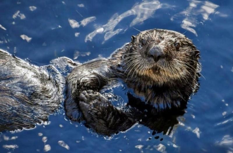 Αυτό είναι το πιο αρρωστημένο ζώο στη φύση - Αποκεφαλίζει και βιάζει!