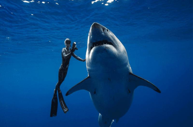 Απίστευτο βίντεο: Δύτες κολύμπησαν πλάι σε έναν γιγαντιαίο καρχαρία!