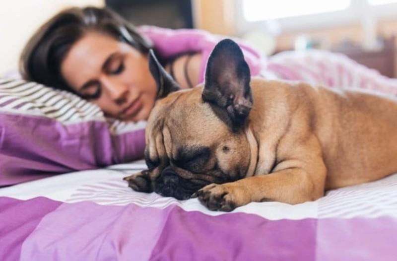 Οι γυναίκες κοιμούνται καλύτερα με σκύλο παρά με άνθρωπο σύμφωνα με έρευνα!