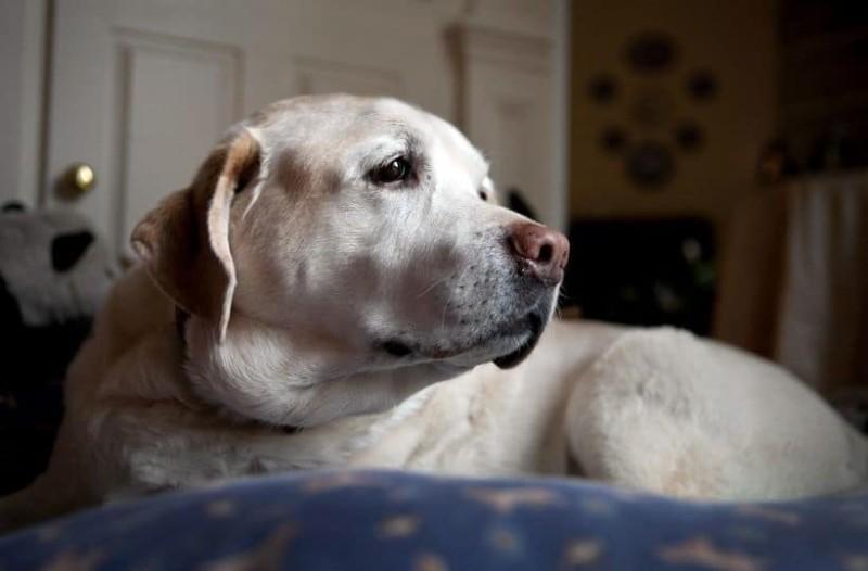Απίστευτες καταγγελίες για δάσκαλο στην Κομοτηνή! Ζητά συνταγές για... σουβλιστό σκυλί! (photos)