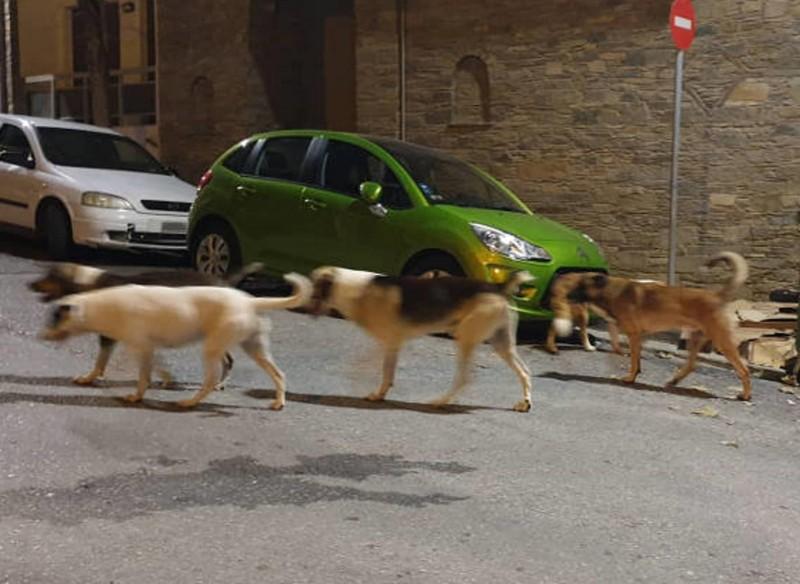 Κοζάνη σκύλος