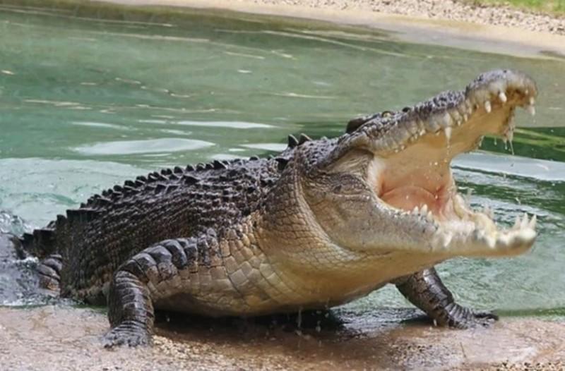 Τρόμος: Κροκόδειλος επιτίθεται σε γυναίκα μέσα σε πισίνα! (Video)