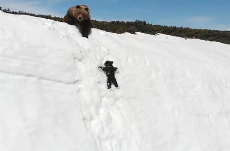 Μαμά αρκούδα βλέπει το μωρό της να πέφτει στον γκρεμό και κάνει το απίστευτο!