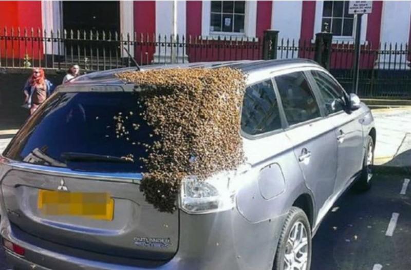 20.000 μέλισσες ακολουθούσαν ένα αυτοκίνητο επί δύο μέρες γιατί είχε εγκλωβιστεί η βασίλισσα τους!