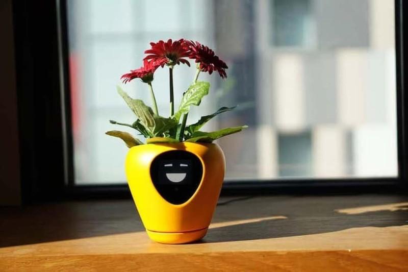 Η έξυπνη γλάστρα! Ένα φοβερό γκάτζετ για να ξέρεις πως νιώθει το φυτό σου!