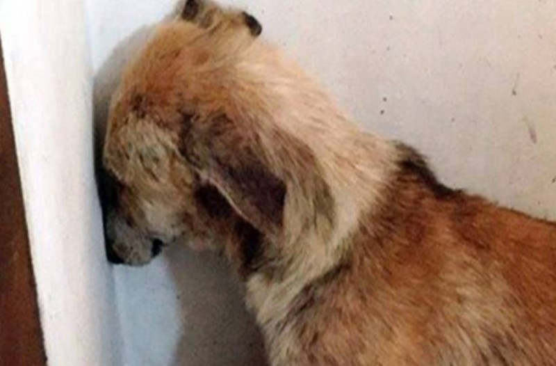 Σκυλίτσα είχε κακοποιηθεί τόσο άγρια που φοβόταν ακόμη και να κοιτάξει τους ανθρώπους! Δείτε όμως πως είναι σήμερα