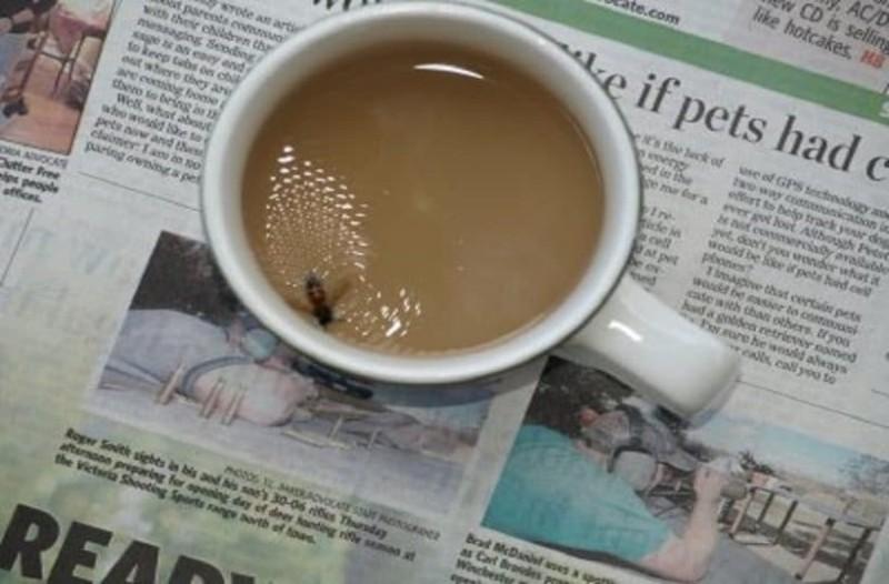 Πώς αντιδρούν οι λαοί όταν πέφτει μια μύγα στον καφέ... το ανέκδοτο της ημέρας! (07/10)