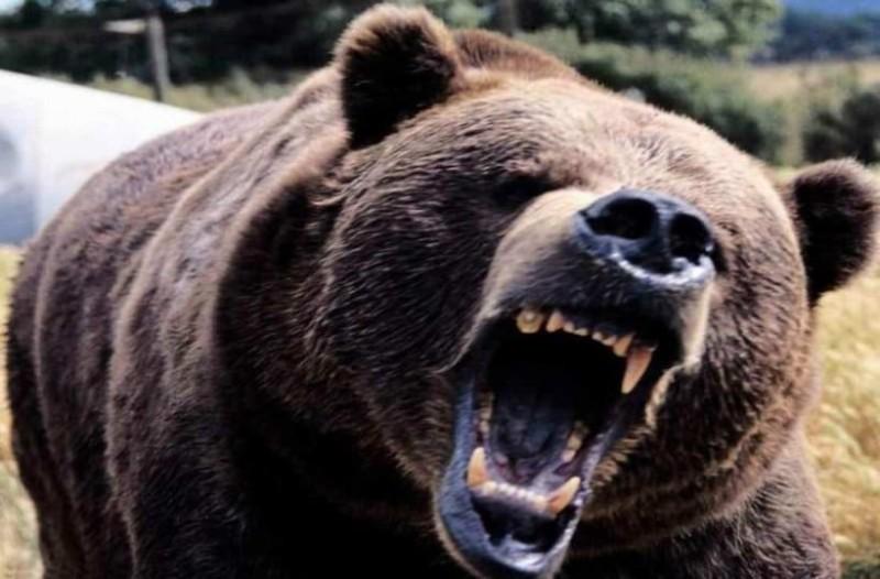 Σοκ στην Καστοριά: Βοσκός δέχθηκε επίθεση από αρκούδα! «Μου έκοψε το δρόμο και...» (Video)