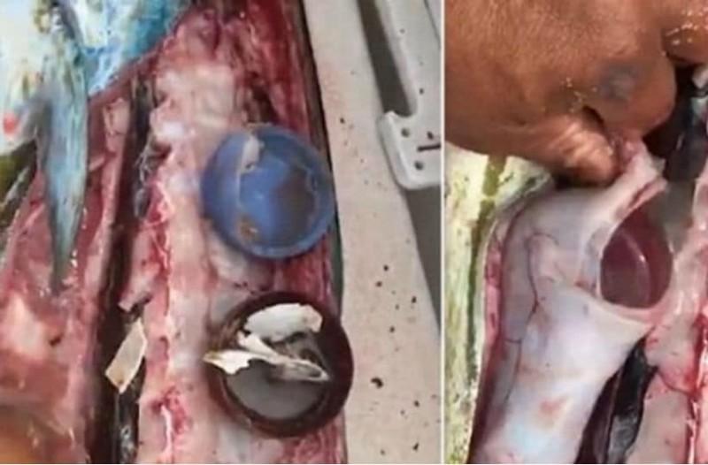 Καθάριζε το ψάρι στην κουζίνα όταν άνοιξε την κοιλιά του. Μόλις είδε τι περιείχε, του κόπηκε το αίμα!