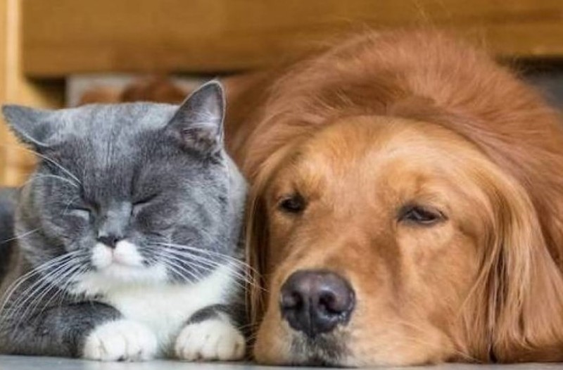 Έτσι θα διαλέξεις το κατάλληλο ξενοδοχείο για τον σκύλο σου όταν λείπεις!