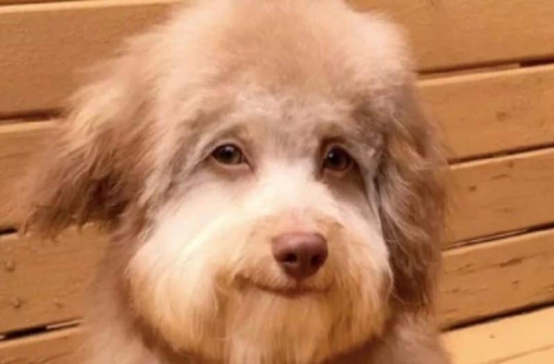 Ο σκύλος με το ανθρώπινο πρόσωπο που έχει ξετρελάνει το διαδίκτυο! (Video)