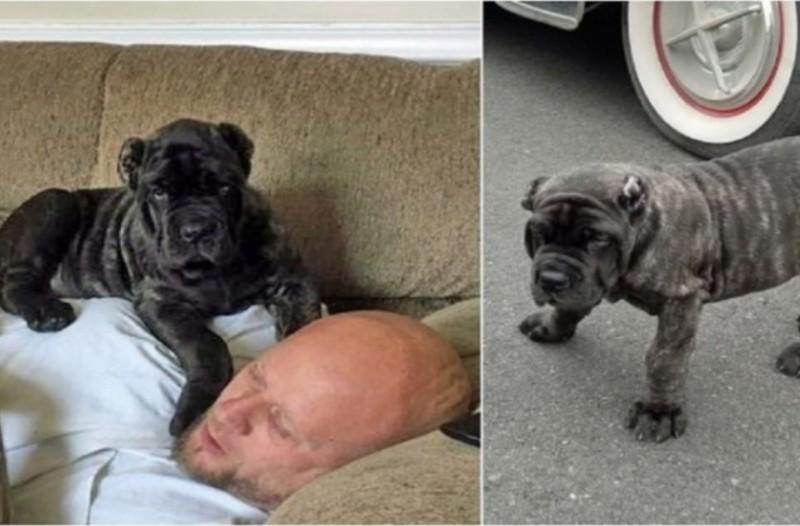 Όταν αγόρασε αυτό το κουτάβι του είπαν ότι θα γίνει γίγαντας. Δεν περίμενε όμως τέτοια εξέλιξη!