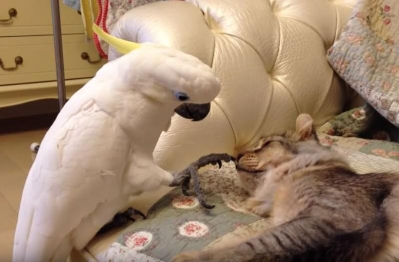 Το βίντεο με τον παπαγάλο και την γάτα που έγινε viral! Δείτε τι της έκανε! (Βίντεο)