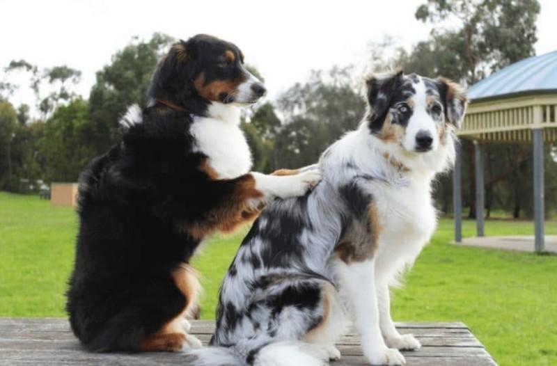 Αυτά είναι τα πιο αστεία video με σκύλους!