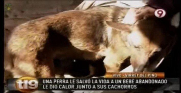 Αδέσποτη σκυλίτσα θήλαζε ανθρώπινο νεογέννητο μωρό που πέταξε στα σκουπίδια η μητέρα του