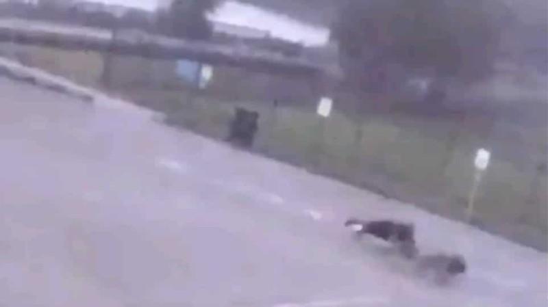 Απίστευτο: Κεραυνός χτύπησε και έριξε κάτω άντρα την ώρα που έβγαλε βόλτα τα σκυλιά του! (Βίντεο)