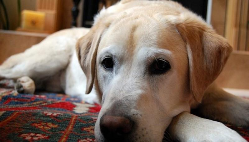 Η κατοχή σκύλου συμβάλει στη μακροζωία!