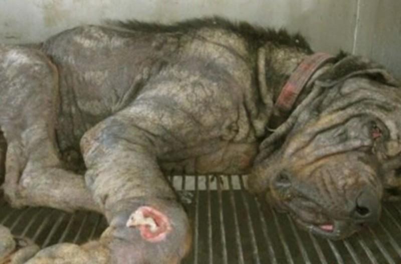 Άφησε τον σκύλο του στον δρόμο με σκοπό να πεθάνει! Αυτό που συνέβη μετά δεν το περίμενε κανείς!
