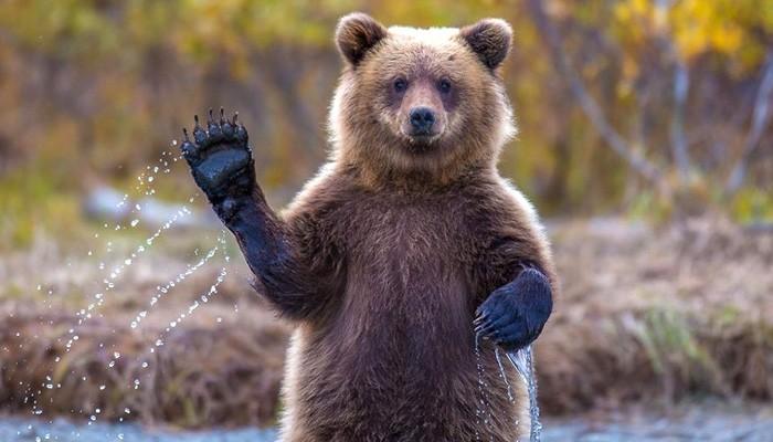 Ανέκδοτο ημέρας αρκούδα