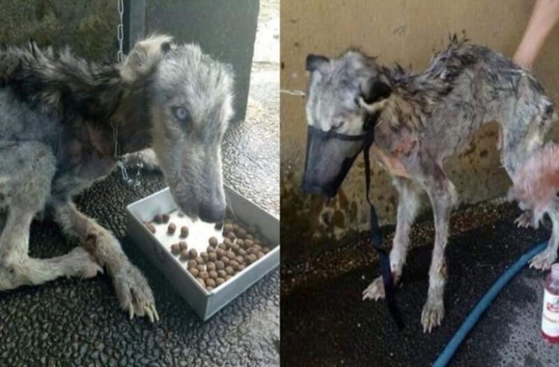 Άντρας έσωσε παραμελημένο σκύλο λίγο πριν πεθάνει - Όταν είδε τη μεταμόρφωση μετά από μέρες έμεινε άφωνος!