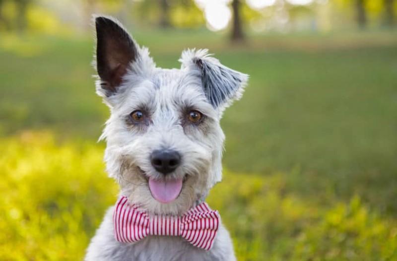 Μάθε τι λέει ο σκύλος σου όταν γαβγίζει! Εσύ το ήξερες;