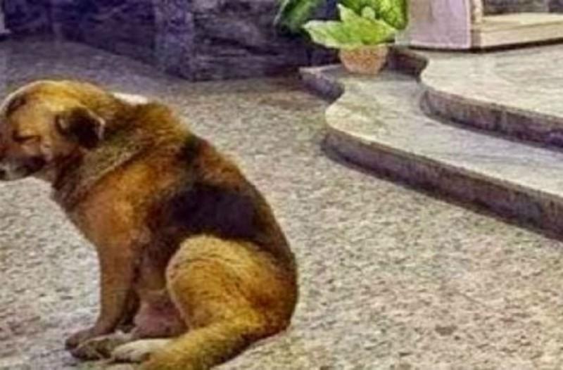 Ο σκύλος της φωτογραφίας βρίσκεται κάθε μέρα στην εκκλησία. Ο λόγος θα ραγίσει καρδιές...