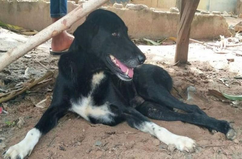 Συγκινητικό: Αυτός ο σκύλος είναι ανάπηρος και έσωσε εγκαταλελειμμένο μωράκι που ήταν θαμμένο σε χωράφια!