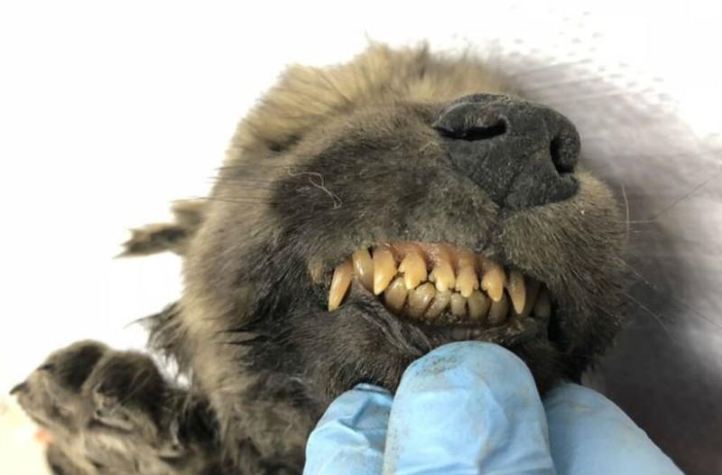 Αυτός ο σκύλος έχει ηλικία 18.000 ετών!
