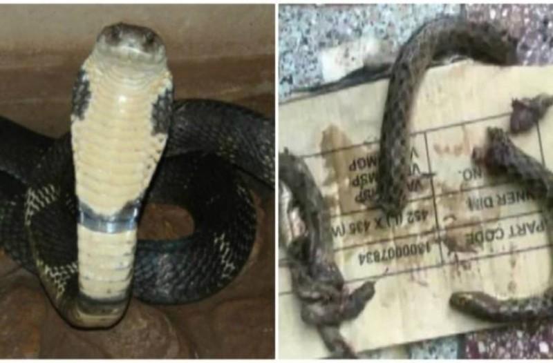 Αδιανόητο: Άντρας δάγκωσε φίδι για να το εκδικηθεί και τώρα είναι στην εντατική σε κρίσιμη κατάσταση!