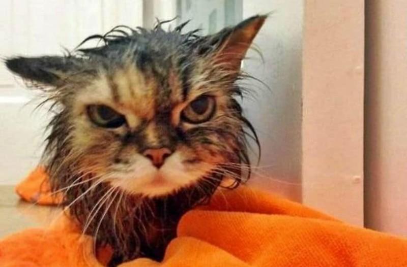 Έπλυνε στο πλυντήριο το γατάκι του!