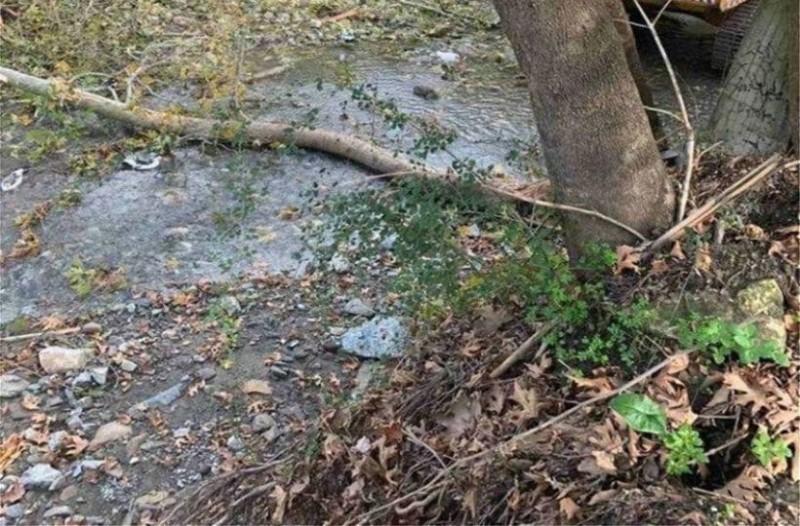 Τραγωδία στην Κρήτη: Δέντρο καταπλάκωσε και σκότωσε άνδρα! (photos)