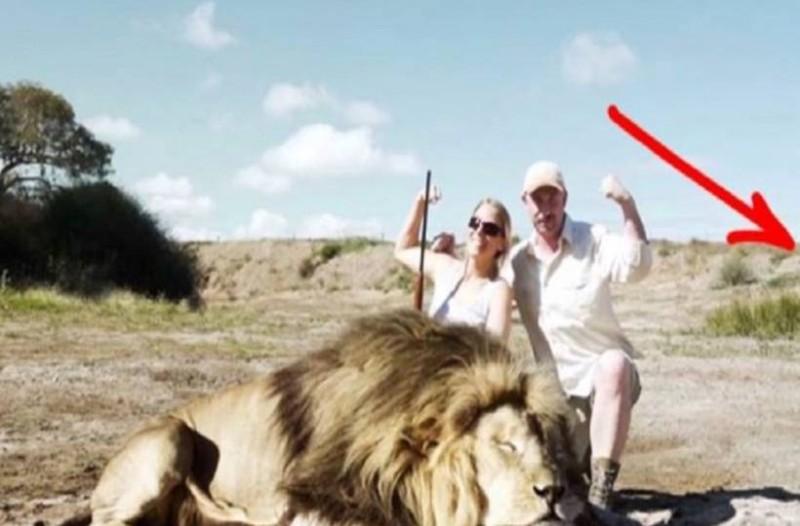 Κυνηγοί σκότωσαν ένα λιοντάρι. Όταν πήγαν να το βγάλουν φωτογραφία, δεν είχαν ιδέα τι τους περίμενε! (video)