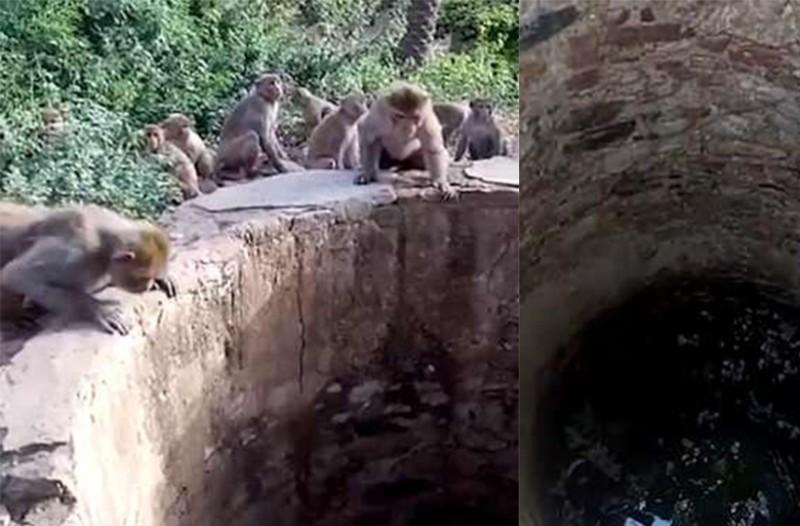 Μαϊμούδες κατάφεραν να απεγκλωβίσουν λεοπάρδαλη από πηγάδι βάθους 8 μέτρων!
