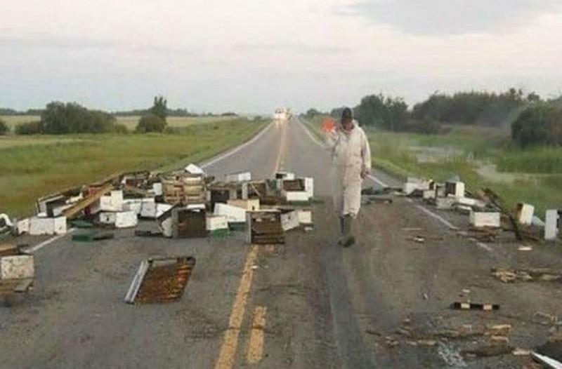 20.000.000 μέλισσες προκάλεσαν κομφούζιο στην εθνική οδό!
