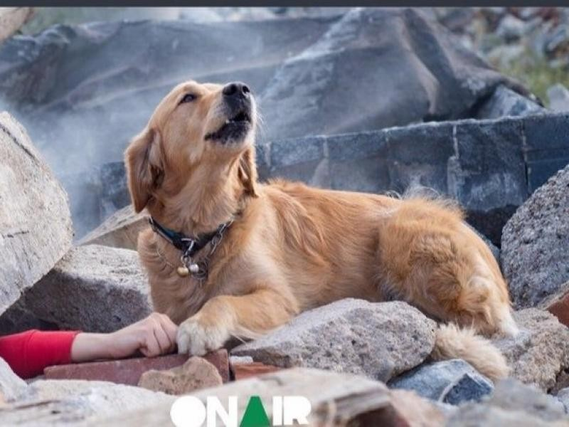 Η φωτογραφία της ημέρας: Σκύλος προσπαθεί να σώσει το αφεντικό του από τα συντρίμμια στην Αλβανία!