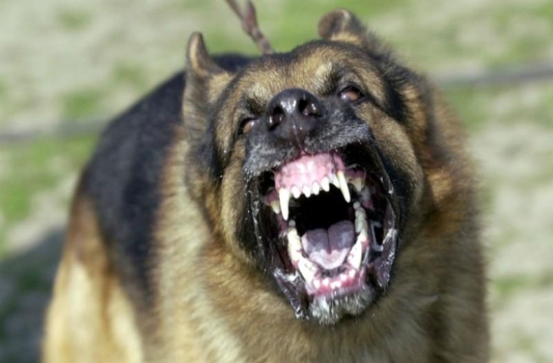 Τραγωδία: Σκυλιά κατασπάραξαν έγκυο! (photos)