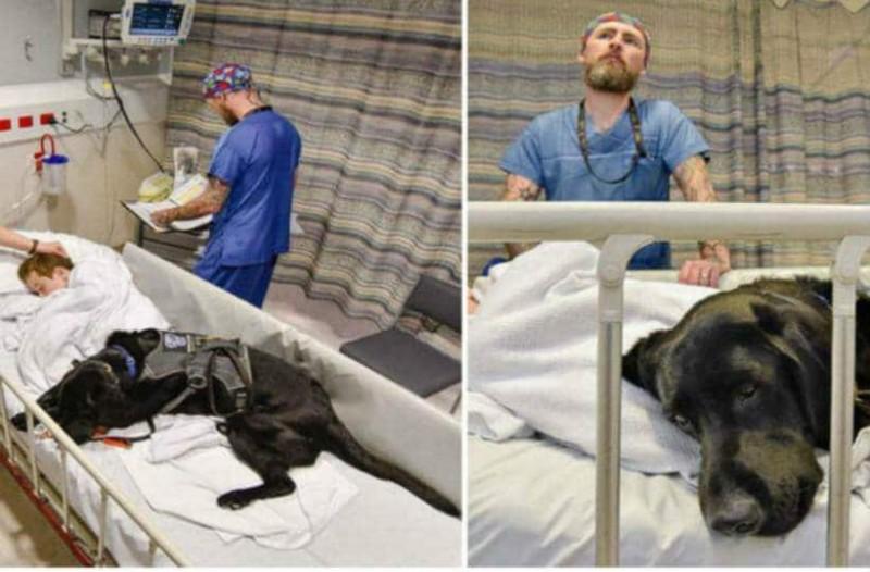 Ο σκύλος της εικόνας είναι ο φύλακας άγγελος ενός παιδιού με αυτισμό - Δεν φεύγει από δίπλα του