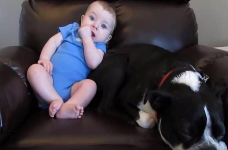 Σκύλος κάθεται δίπλα σε μωρό... ο λόγος θα σας τρελάνει! (Video)