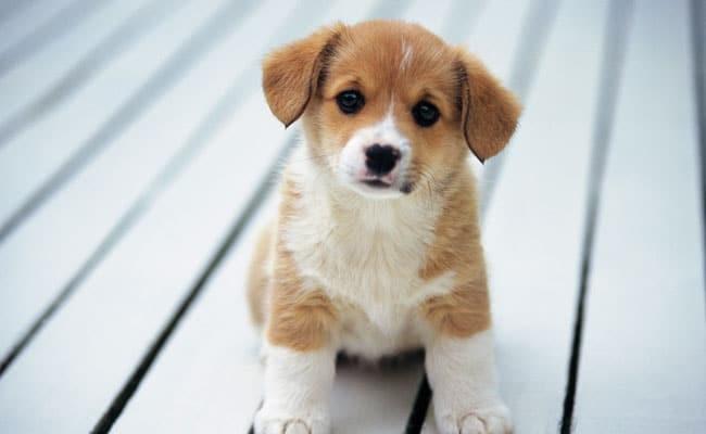 Σκύλος Κινέζος πολίτης φυλάκιση περίεργα ονόματα