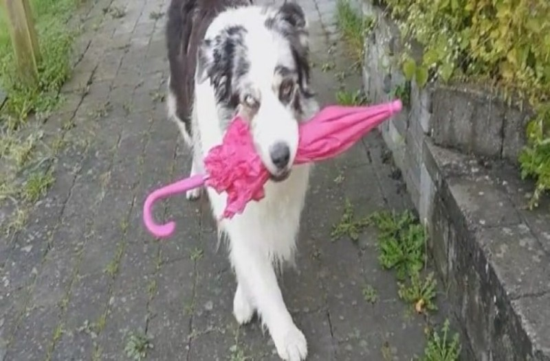 Αν δείτε αυτόν τον σκύλο να χορεύει με την ομπρέλα στο στόμα θα σας φτιάξει η μέρα!