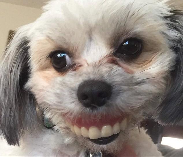 Σκύλος φοράει την μασέλα